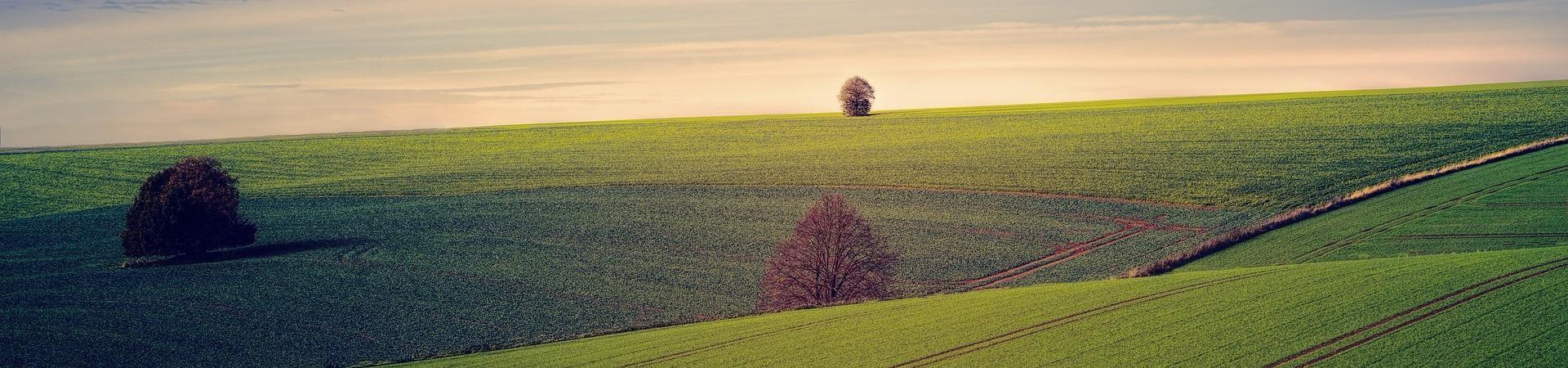 fields-3799279_1920